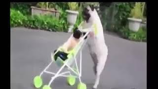 Смешные собаки 2018 Сборник приколов