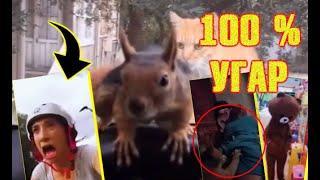 """Чepeз poт!"" 100% yгapнoe видео: юмор, курьёзы, глyпocти, нелепости, забавные животные и приколы"