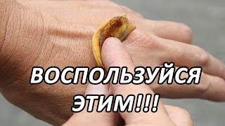 Удивительные свойства банановой кожуры. Подумай, выкидывать ли...#ActualTime