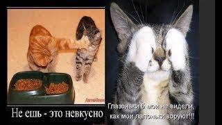 Про кошек и про котов. Прикольные фото с надписями юмор.
