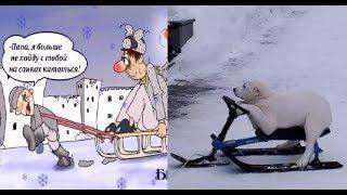 Про санки. Карикатуры смешные картинки прикольные фото юмор.