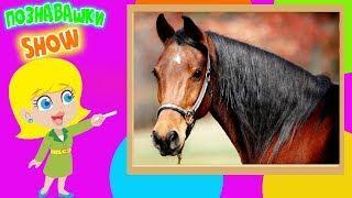 Лошадки познавательное видео для детей обучающее развивающее