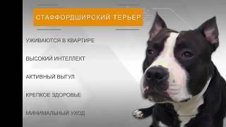 Собака нуждантся в физической активности, познавательное видео