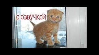 ПРИКОЛЫ С КОТАМИ С ОЗВУЧКОЙ на русском – Угарный юмор от EE Igor Gay #2