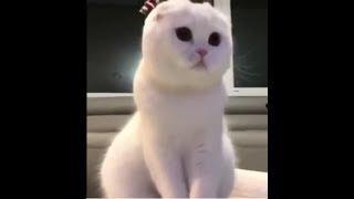 Coub animals #6 Приколы с животными, смешно, приколы с котами, коты, юмор, смешные коты и кошки 2019