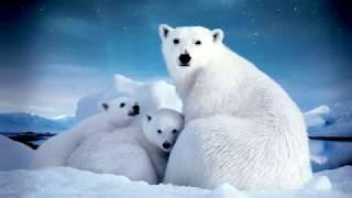 Животные и птицы Арктики. Познавательное видео для детей с русской озвучкой.