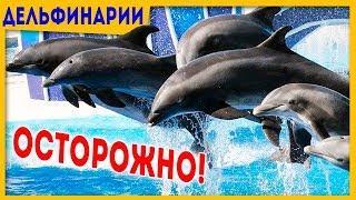 Мифы и факты! Дельфины, дельфинарий и дельфинотерапия