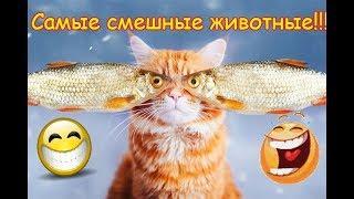 Самое смешное видео в мире,смешные животные,коты,собаки,юмор  2019 #5