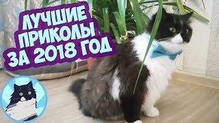 ЛУЧШИЕ ПРИКОЛЫ ЗА ВЕСЬ 2018