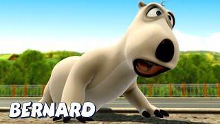 Бернард Медведь | Это больно! | Мультфильмы для детей | WildBrain