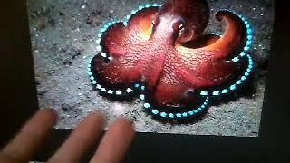 Познавательное видео !!! Информация об осьминогах!