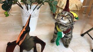 Как сшить костюм шута для кота