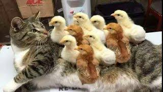 Смешные коты, кошки и другие животные – Хозяева бывают идиотами 2019 #3