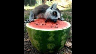 смешное видео с животными  юмор про животных  смешные животные  приколы про животных