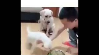 Funny dog - He's hungry, let he eat !