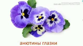 Знакомство с цветами