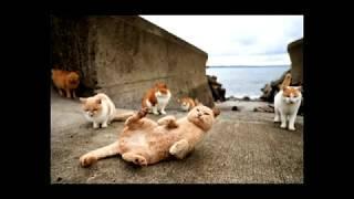 Мир котов фантастический рассказ юмор