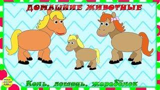 Учим животных:  конь, лошадь, жеребёнок! Развивающие мультфильмы о животных