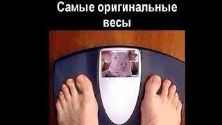 ТОП лучших картинок ХУДЕЕМ К ЛЕТУ - Юмор дня