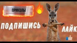 НОВЫЕ ПРИКОЛЫ/ЖИВОТНЫЕ/ЮМОР С ЖИВОТНЫМИ 2019!!!
