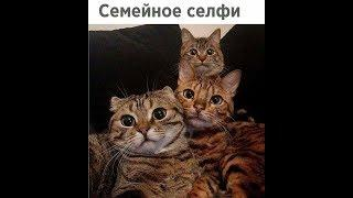 Юмор августа))