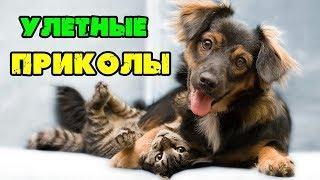 Смешные животные 2019.Приколы с кошками и собаками.Юмор.Улыбка до Ушей.