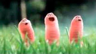 Гусеницы★ [Прикольный Мультик] ★ Смешные мультики  лучшие мультфильмы для детей