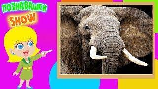 Познавательное видео про слонов для деток