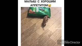 Смешные видео с животными. Приколы с собаками и кошками. Угарные видео. Юмор.