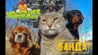 Смешные животные 2019.Приколы с Котами Собаками.Юмор Улыбка до Ушей.