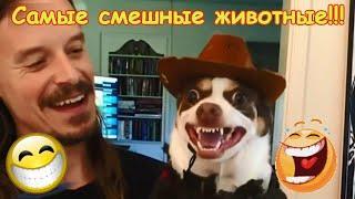 Самое смешное видео в мире,смешные животные,коты,собаки,юмор 2019 #3