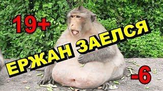 ПОДБОРКА ПРИКОЛОВ/ЗАСМЕЯЛСЯ-ПОДПИСАЛСЯ/ЮМОР/УГАР/СМЕХ