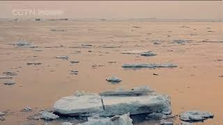 Документальные фильмы 03/06/2018 Сила приро