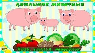 Учим животных:  хряк, свинья, поросёнок! Развивающие мультфильмы о животных