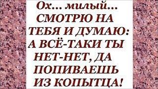 РЖУ НЕ МОГУ. Женский юмор на КАЖДЫЙ день. Выпуск 13.
