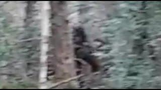 Hikers film Bigfoot at Muir Woods National Monument