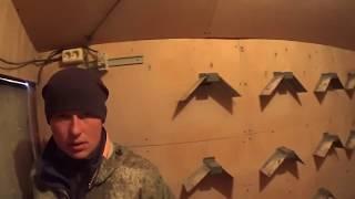 Подкидываем Николаевских голубей, молодняк. Зимний гон голубей
