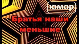 Братья наши меньшие (юмор)