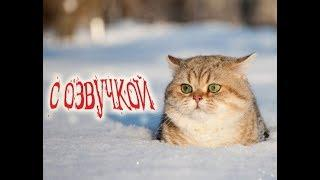 Приколы с котами - СМЕШНАЯ ОЗВУЧКА ЖИВОТНЫХ – Тест на психику от DOMI SHOW
