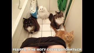 ПОПРОБУЙ НЕ ЗАСМЕЯТЬСЯ - Смешные Приколы с Животными до слез, смешные коты, funny cats #93
