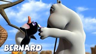 Бернард Медведь | Таскание за волосы и многое другое | Мультфильмы для детей | WildBrain