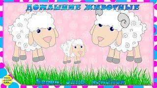 Учим животных:  баран, овца, ягнёнок! Развивающие мультфильмы о животных