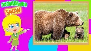 Медведи познавательное видео для детей обучающее развивающее