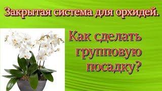 Закрытая система для орхидей. Как сделать групповую посадку?