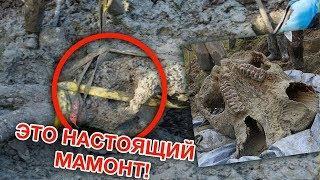 Фермер работал в поле и нашел там мамонта, который лежал в обнимку с