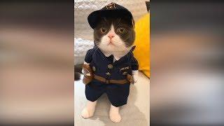 Смотреть юмор и приколы с кошками и собаками. Приколы с животными#8. Смешные коты 2019 Funny cats