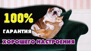 Смешные животные.Новые Приколы с котиками и собаками.Юмор.Улыбка до Ушей.