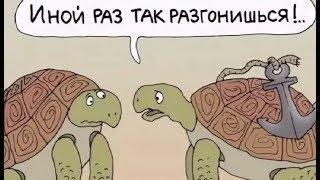 Про черепаху. Смешные черепахи. Карикатуры смешные картинки  ЮмОр