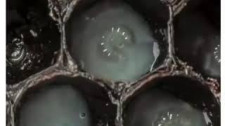 Как появляется пчела/ Познавательное видео