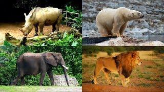 Развивающие Мультики для Самых Маленьких Изучаем Животных Мультфильмы для Детей